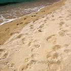naxos-plaka-beach-03