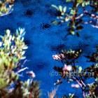 Πήλιο παραλία Φακίστρα