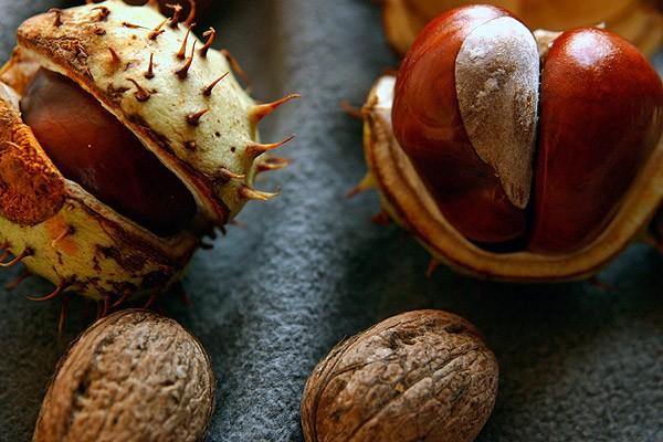 καστανα-chestnut-kastanitsa